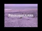 Фиолетовые пляжи. Азовское побережье. Бердянская коса