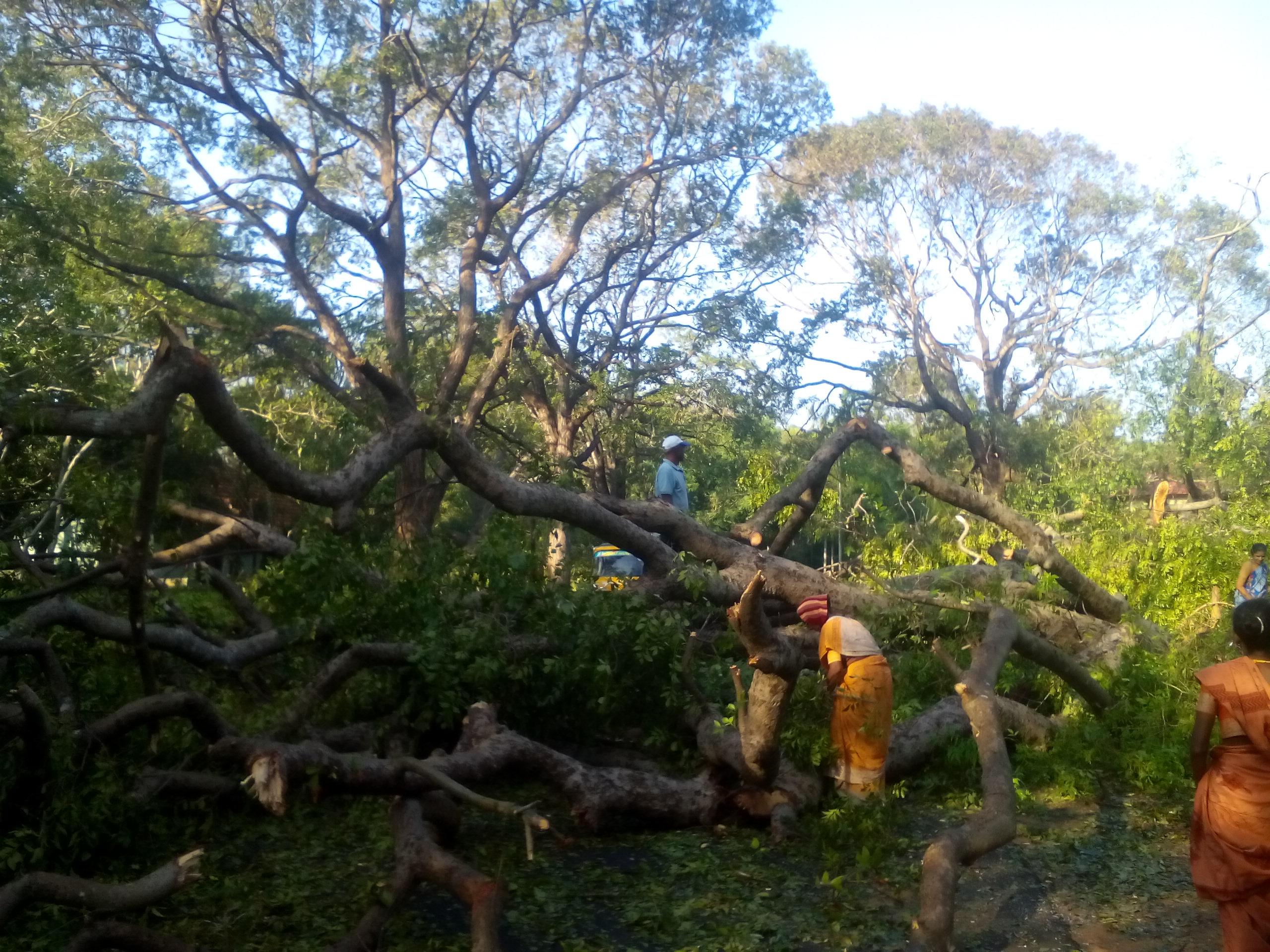 устранение последствий урагана в Адьяре