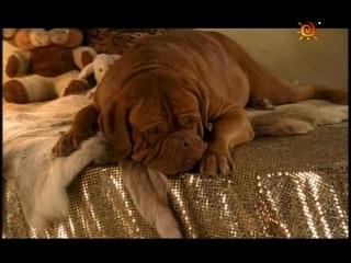 Т/С Домик с собачкой 6 серия (2002г)