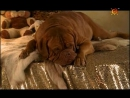Т С Домик с собачкой 6 серия 2002г