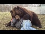Обнимашки с животными
