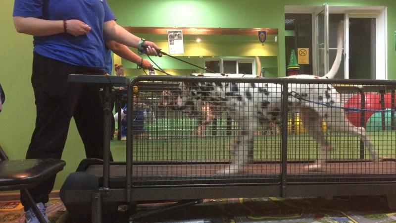 DogShow SportClub первые беговые шаги по дорожке