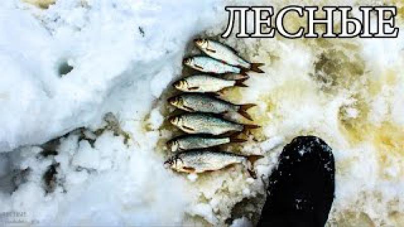 ЛОВУШКА ДЛЯ РЫБЫ ИЗ ЛЬДА - ЛЕДЯНОЙ ТУПИК | Ice Fish Trap