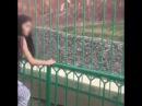 Мужчина кинул камни во льва Хамзу в зоопарке Алматы