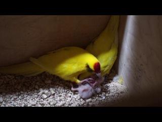 Яша кормит птенца