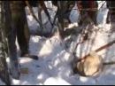 Охота на медведя в Якутии ч. 2