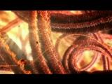 Наша загадочная вселенная: Скрытая жизнь клетки. Our Secret Universe: The Hidden Life of the Cell (BBC, 2012)