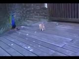 Ух ты!!! а что это за курица такая интересная? .Ну-ка перышки дай потрогаю