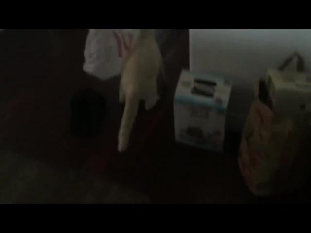 Spider CAT or MAD CAT