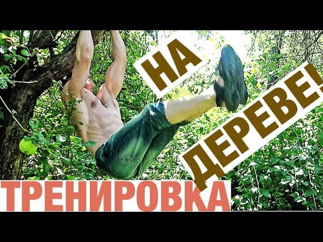 Тренировка на дереве! Не нужен зал и турники-брусья!