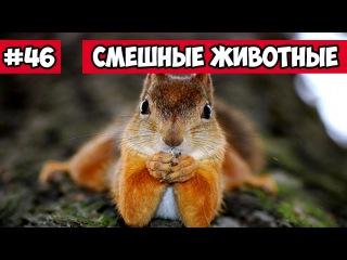 Смешные животные - Беличьи бои | Bazuzu Video ТОП подборка сентябрь 2017