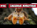 Смешные животные - Беличьи бои Bazuzu Video ТОП подборка сентябрь 2017