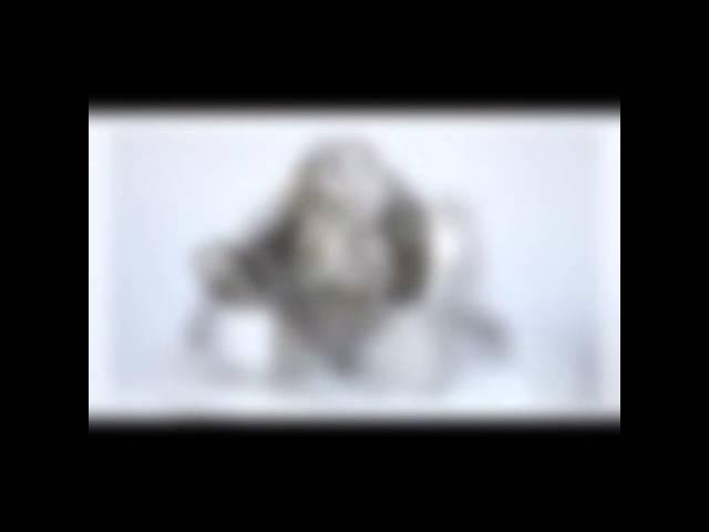 Le Bonhomme de Bois - Peluche Lapin Marius Z'Animoos