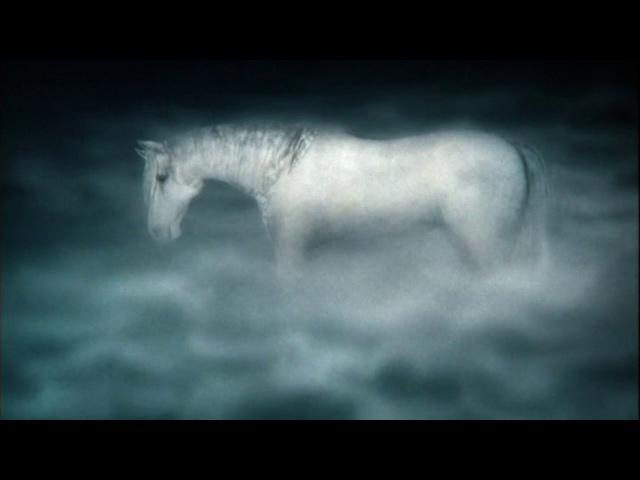 Ежик думал о лошади. Как она там? В тумане