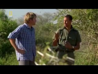 Жизнь носорогов. Носороги в дикой природе. Документальный фильм National Geographic