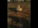 гифки-корова-девушка-борьба-4051900