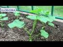 ГЛОБИОМА Биота Макс - Восстановление почвы. Средства защиты растений. Биофунгиц