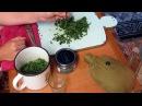Семья Бровченко. Рецепт мятной настойки на спирту - от головных болей, болей в желудке и тошноты.