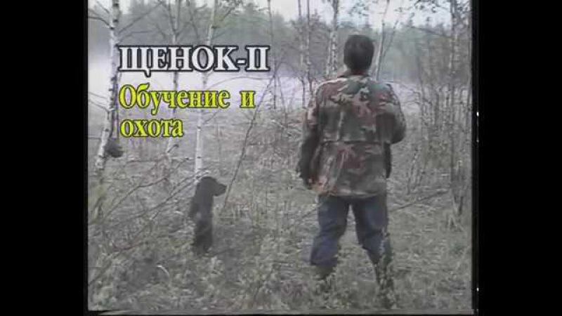 Щенок. Ч-2 Дресировка и охота с РОСом. Дрессировка русского охотничьего спаниеля ...