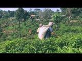 Моя Шри-Ланка  My Shri-Lanka  Trip 2017