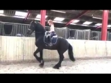 Excellent ,Well trained friesians For sale !!