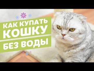 Сухой шампунь для кошек в виде спрея 8in1 Perfect Coat Waterless Shampoo