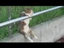 Кот-наблюдатель и, даже где-то, философ...