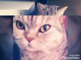 Моя любимая Элис
