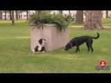 Собак тоже можно разыгрывать.
