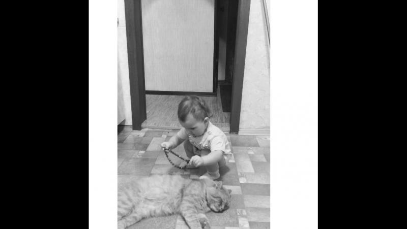 Алиса стилист 👶🏻😄💕 модель-кот мандарин 😺🐱😂 frolovfamily алисазефирка когдадомазоопарк