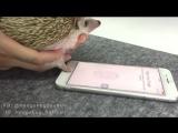 Ёжик и IPhone