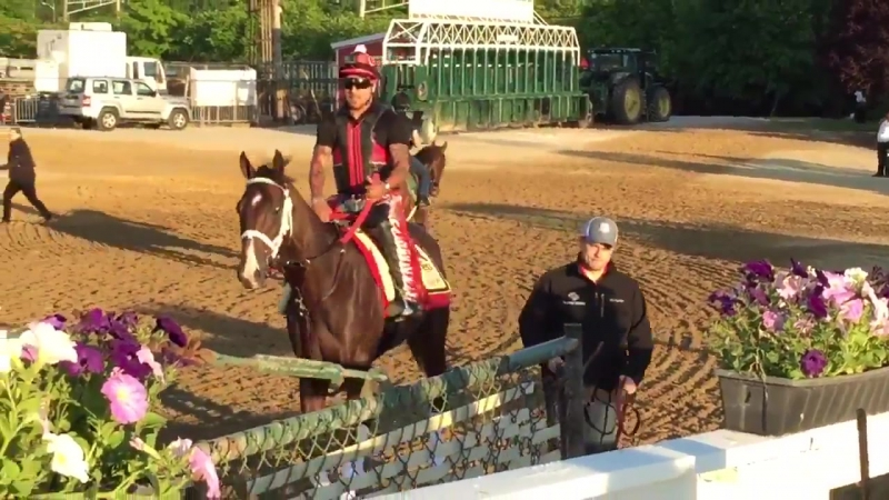Classic Empire asst trainer heading to track Pimlico to prepare for Preakness