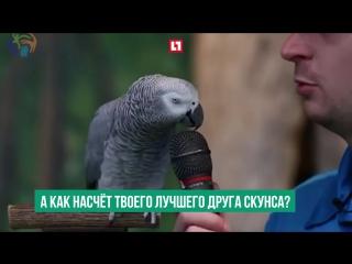 Попугай по кличке Эйнштейн отмечает свой юбилей