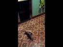 кроличья лапка