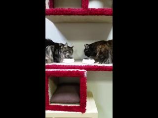 санкт Перербург Республика кошек