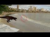 ТОП реальных нападений динозавров снятых на видео #динозавры #динозаврывидео