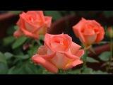 Tanti Auguri di Buon Compleanno! - Video Dailymotion