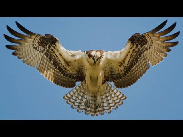 О птицах и их образе жизни (рассказывает орнитолог Евгений Коблик)