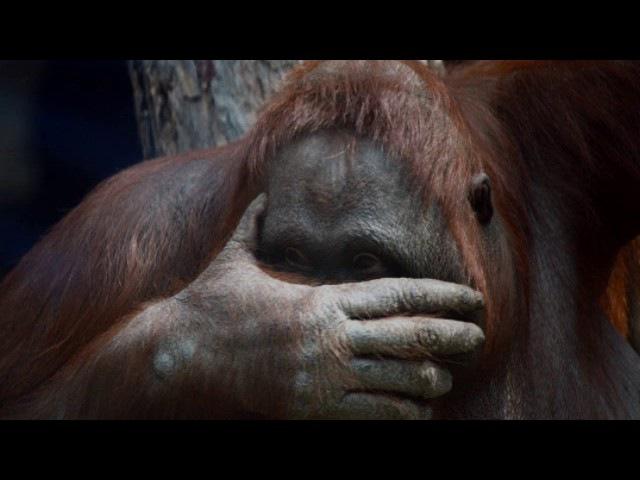 О последствиях стресса у животных (рассказывает биолог Андрей Тупикин)