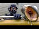Речные Монстры. Подводная Охота. Астраханские Сомы