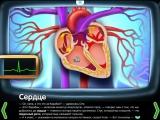 Сердце. Строение сердца - развивающий мультфильм для детей (1)