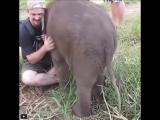 Животные знают толк в обнимашках