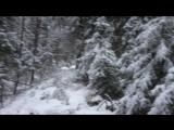 Старый Новый Год отмечаем в лесу