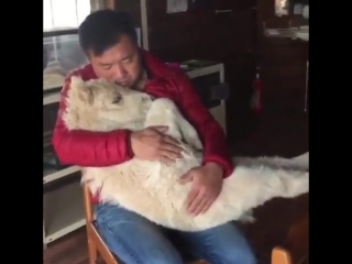 Каждое животное заслуживает быть любимым