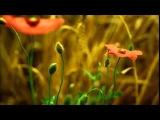 Daemonia Nymphe -