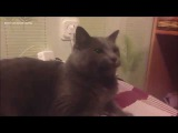 Кот с длинным языком и смешная реакция на рулетку