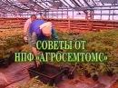 Все секреты выращивания рассады томата от агрофирмы Агросемтомс