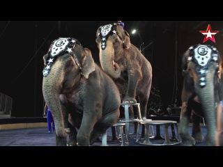 Легенды цирка (16) - Слоны династии Гартнер