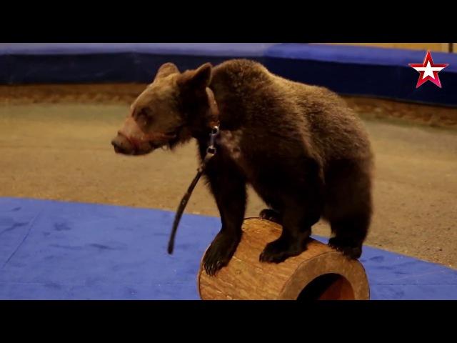 «Легенды Цирка с Эдгардом Запашным» - №14 - Бурые медведи Александровых