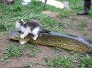 Котенок не отдает свою добычу. Какой прикольный злюка